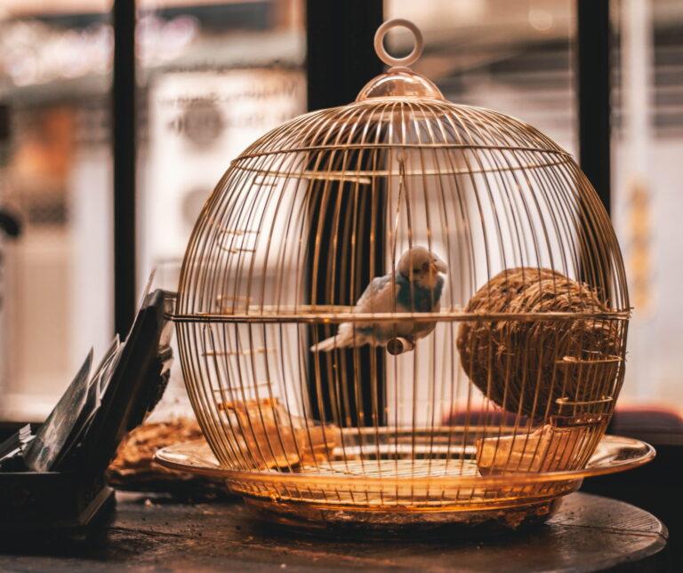 Read more about the article Le Sénat détricote la proposition de loi sur la maltraitance animale