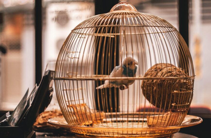 Le Sénat détricote la proposition de loi sur la maltraitance animale