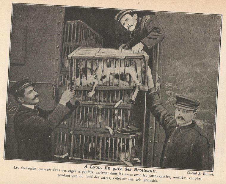 «L'enfer des bêtes» : un rapport de 1913 sur la «malfaisance envers les animaux»